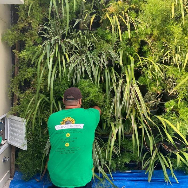 manutencao-de-jardins-horto-girassol-(6)-min
